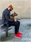 Modern hairstyling methods allow perfect matching to your gYorkshire terrier