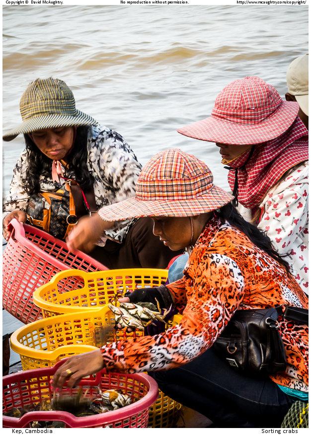 Sorting crabs
